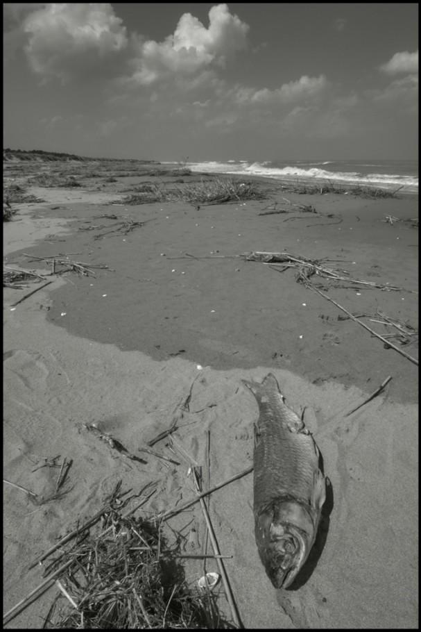25 aprile 2005, spiaggia alla foce del Bevano