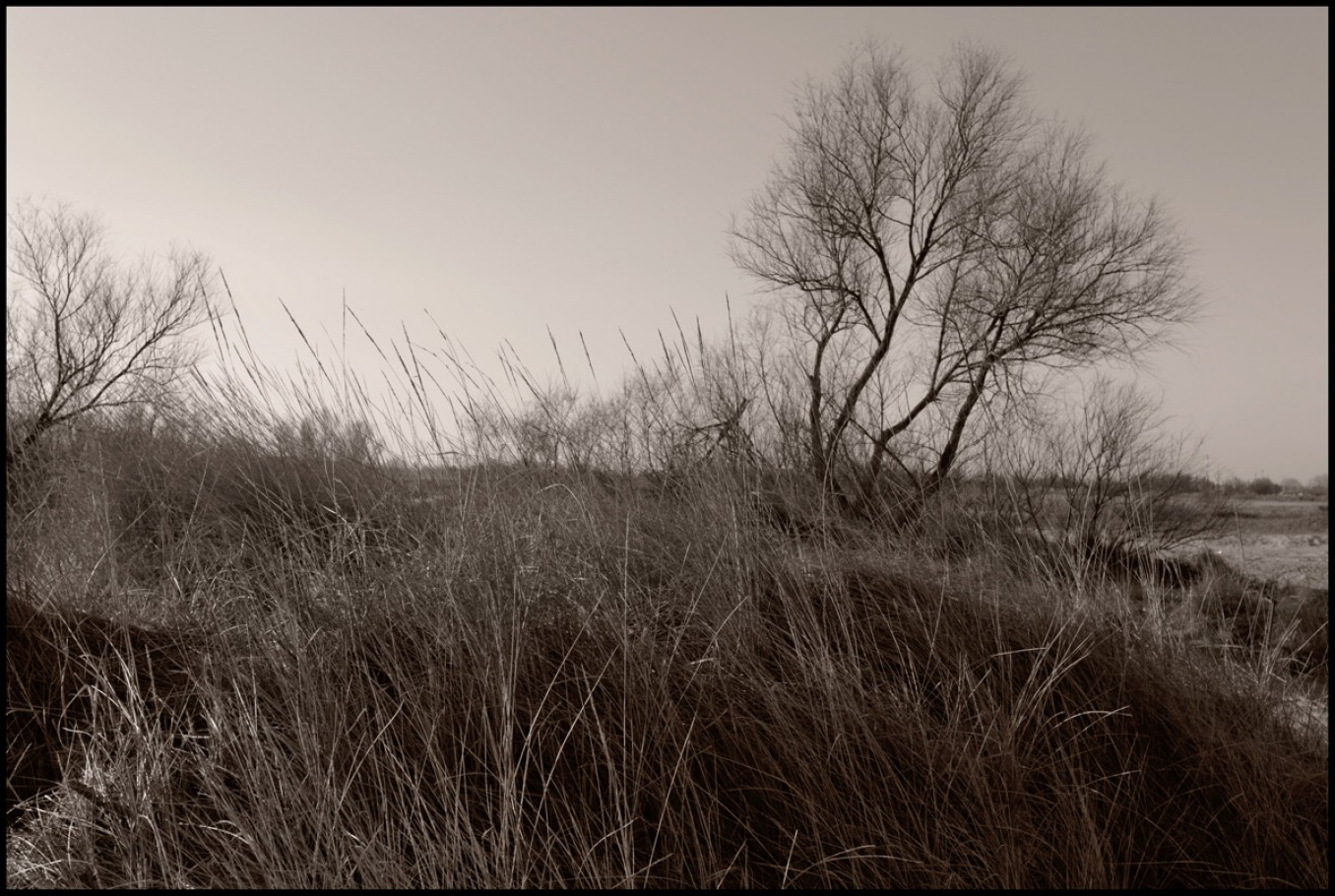 26 gennaio 2014, dune a Lido di Dante